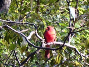 Observation Oiseaux New York