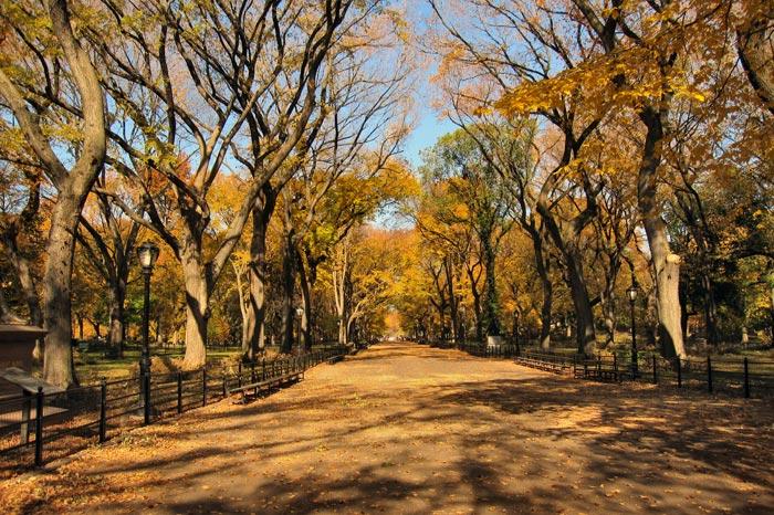 Central Park - Automne