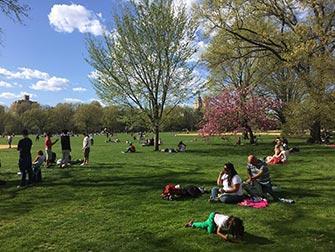 Central Park - Le Great Lawn