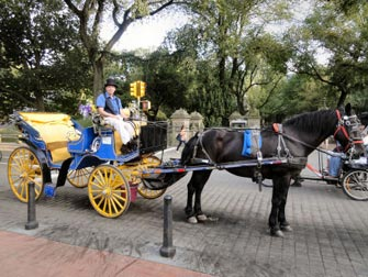 Central Park - Tour en calèche