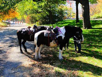 Central Park à New York - Chevaux