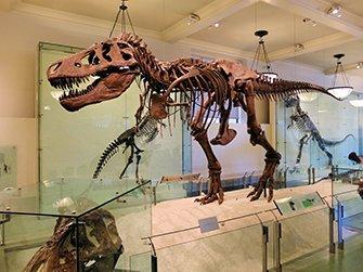 Musée d'Histoire Naturelle à New York- Dinosaure