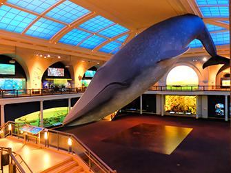 Musée d'Histoire Naturelle à New York- Ocean Life