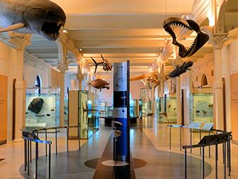 Musée d'Histoire Naturelle à New York- Visite VIP