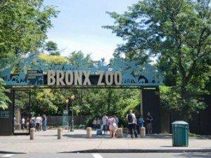 Bronx Zoo à New Yor