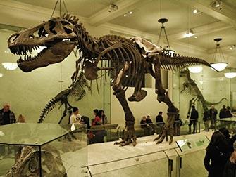 musee-histoire-naturelle-new-york-dinosaure