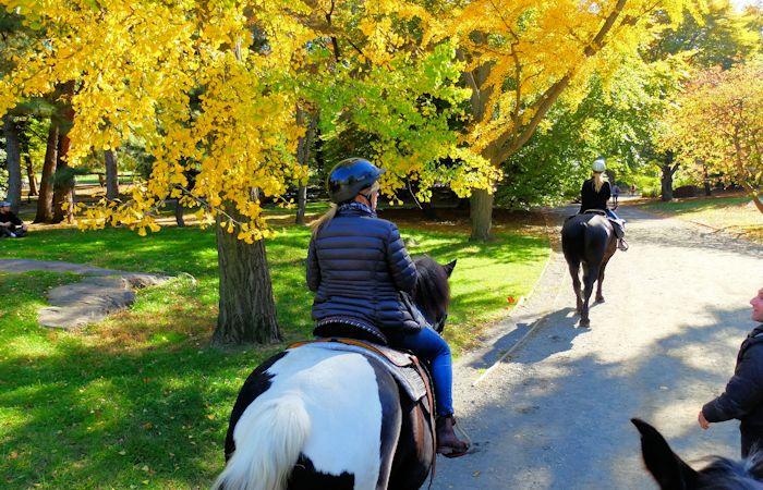 Balade à cheval à Central Park - Balade à cheval